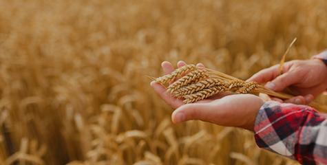 수확의 계절 '가을' 농업일자리